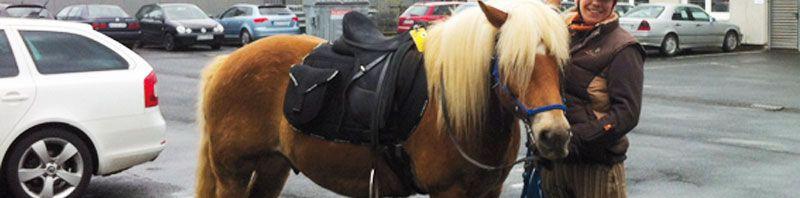 Benzinsparende Alternativen für den Arbeitsweg – heute: das Pferd