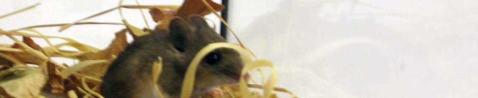 KVM: Keyboard, Video und Maus – Mäusejagd bei G&D